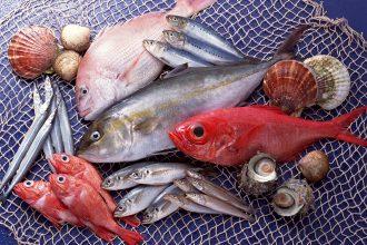 Cách để giữ cá tươi lâu