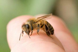 Hướng dẫn cách chữa ong đốt nhanh nhất ...