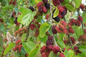 7 loại cây tuyệt đối không được trồng trong nhà ...
