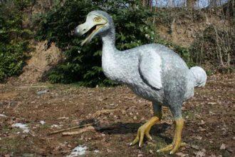 Bộ xương chim tuyệt chủng có giá hơn 430.000 USD ...