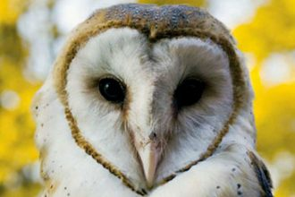 Bí ẩn về loài chim báo hiệu cái chết ...