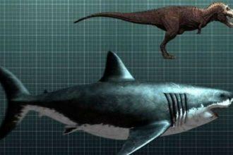 Lý do khó đỡ khiến cá mập Megalodon tuyệt chủng ...