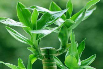 16 loại cây cảnh trồng trong nhà sẽ giúp bạn ...