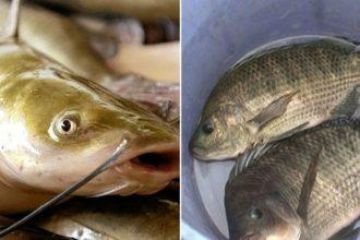 """Điểm mặt 8 loại cá """"ngậm"""" thủy ngân nhiều nhất, ..."""